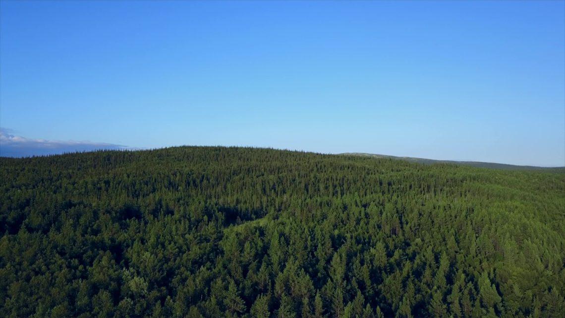 В Кольском районе начата регистрация добровольцев для тушения пожаров в лесах